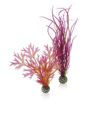 biOrb plantenset medium rood & roze