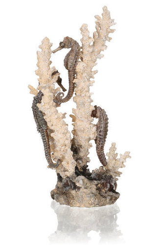 biOrb seahorses on coral natural M